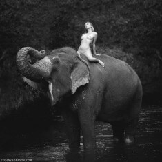 Девушка на слоне